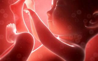 Развитие плода по неделям беременности: описание